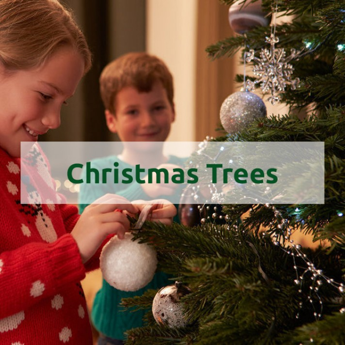 Christmas Trees - Traditional, Fibre Optic, LED, Snow Covered