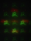 Red & Green Laser Light with 16 Images