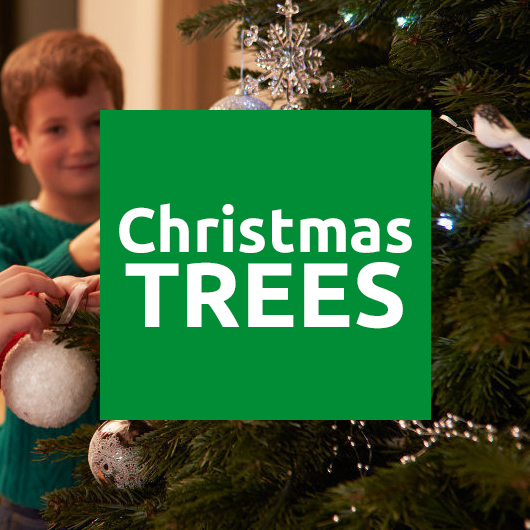 Christmas Trees Online