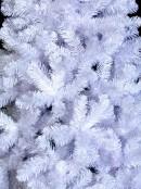Winter White Pine Christmas Tree - 2.3m