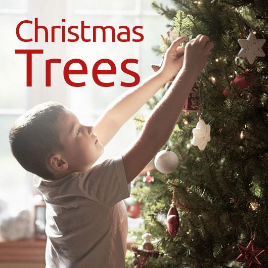 Christmas Decorations, Christmas Trees And Christmas